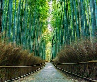 古都の雰囲気をたっぷり感じる!定番スポットを巡る京都旅行