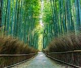 京スイーツを堪能する、京都定番旅
