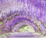 藤・桜・イチゴが彩る、北九州「春色」の旅