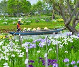 初夏の花「あやめ」「紫陽花」で季節を感じる千葉・茨城旅