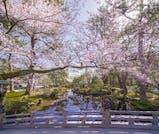 旬のグルメとお花見を楽しむ、春の金沢旅行