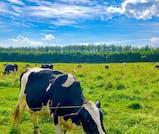 のどかな牧草地を駆け抜ける!帯広&十勝を堪能するドライブ旅