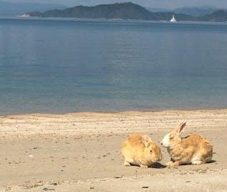 うさぎに癒され、レトロな町を散策!大久野島・竹島の旅