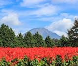 大自然を肌で感じる!紅葉や温泉を楽しむ秋の鳥取旅