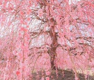 春はすぐそこ。梅の香り漂う「鈴鹿」を満喫する旅